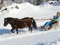 Schlittenfahrt mit Pony Curly