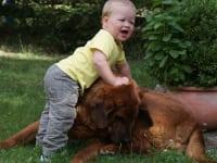 unser gutmütiger Hund