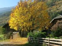 Herbstimpressionen