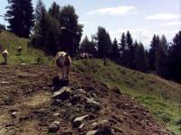 ein Besuch bei den Kühen