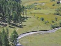 Naturschutzgebiet Astner Moos