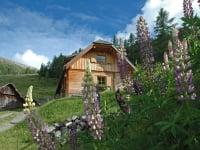 Blumepracht bei der Wolfsbachhütte