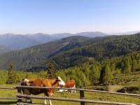 Heinrichbauerhütte -  Besuch der Weidetiere