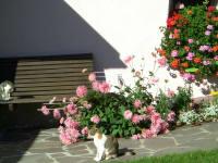 Inmitten der Blumen relaxen
