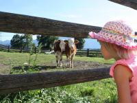 Lara beim Beobachten unserer Kühe
