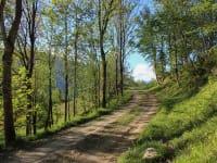 Der Feldweg nach Schönbuch