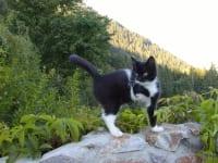 Unsere dreibeinige Katze Daisy