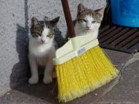 2 Babykatzen