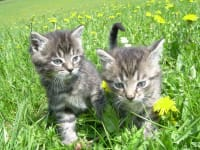 kl. Katzen