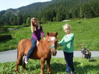 Pony Gitti freut sich auf Besuch