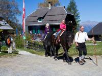 Pferdetrekking