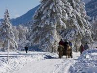 Pferdeschlittenfahrt durch die Winterlandschaft