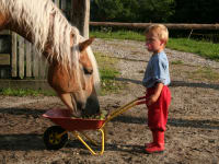 Pferd Evita