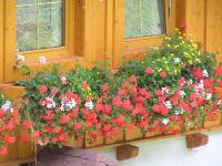 Blumen am Bauernhof Huss