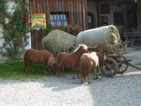 Ponyfarm