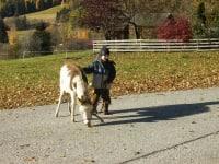 Karlson unser Esel