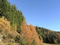 Herbst am Tengghof