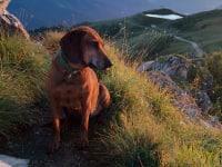 Wanderung mit Sindy (Wöllaner Nock)