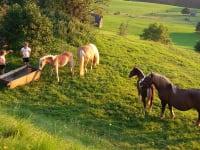 Unsere Pferde mit Fohlen .....