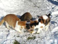 Katzen im Schnee