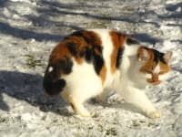 Katze im Schnee