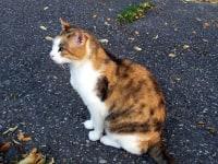 Unsere Katze Sandy