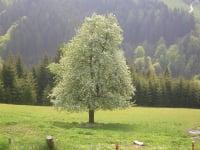 Blick vom Almhaus auf die Weide