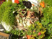 Katze auf Kutsche