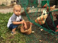 Auch die Hühner müssen gefüttert werden