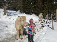 Ponys im Schnee