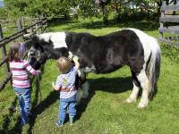 Pony-Putz
