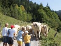 Viehauftrieb