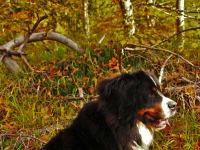 ...im Herbstwald...