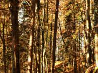 Wanderwege im Herbst