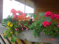 Terrasse-mit Blumen
