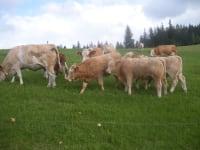 Tiere auf der Weide