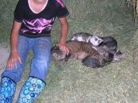 Petting cats