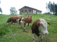 Free stall barn and cows out to pasture