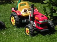 Kätzchen auf Traktorfahrt