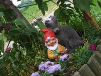 Simba mit Zwerg