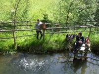 Fischteich mit Bio gefütterten Forellen