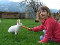 Streichelzoo mit Kaninchen