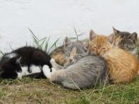 viele Katzen zum Streicheln