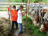 Rinder füttern
