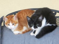 Aria u. Sanso unsere Baby-Katzen