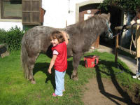 beim Pony Putzen