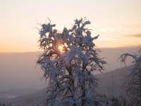 Birnbaum im Winter Sonnenaufgang