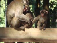 Ausflugsziele: Abenteuer Affenberg