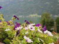 Blumenmeer und See - gibt es etwas Schöneres?