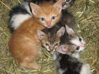 Katzenbabys